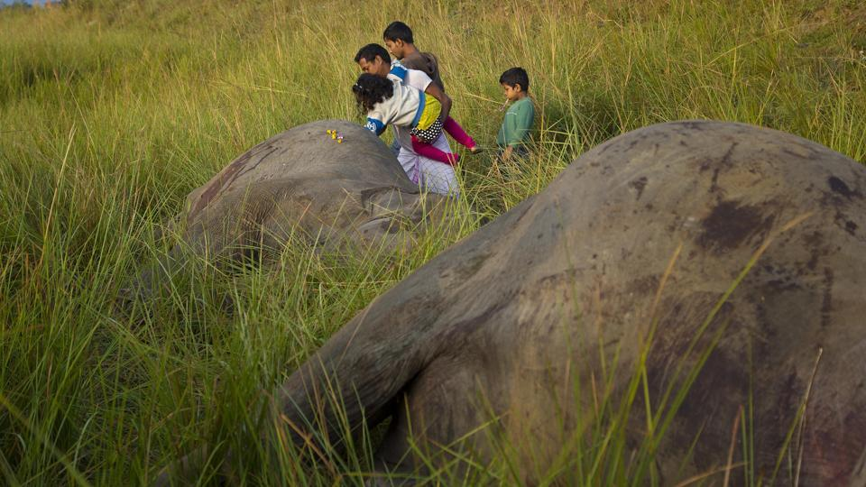 A villager props his daughter as she places flowers on the carcass of one of two elephants from the herd that were hit by a passenger train while crossing the tracks.  (Anupam Nath / AP)