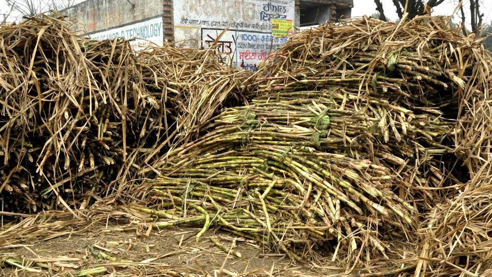 sugarcane,Punjab farmers,Punjab news