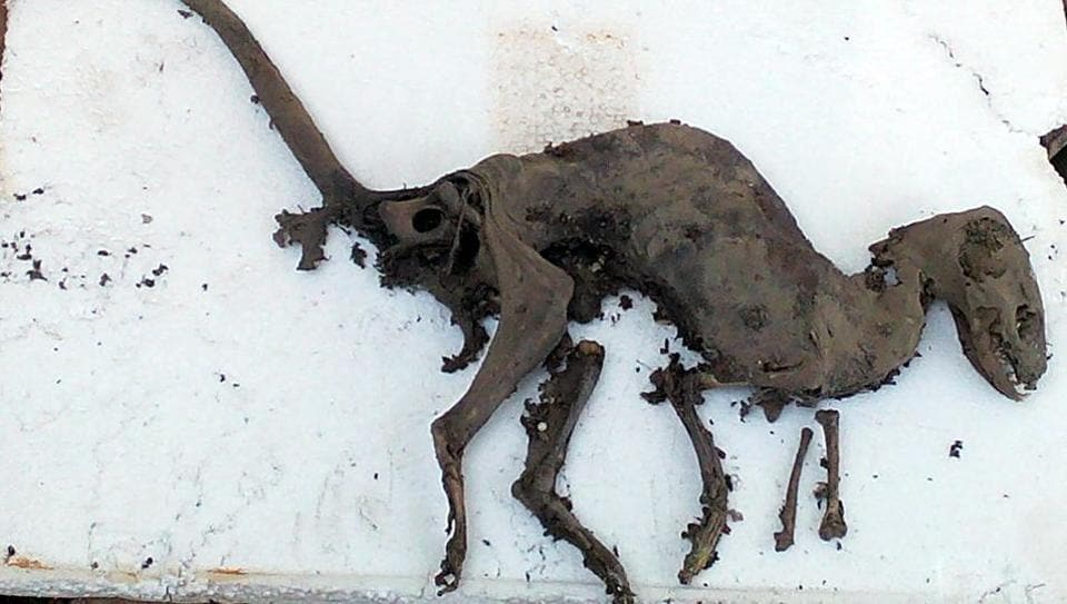 Dinosaur-like creature's fossil. The land where the fossil has been found belongs to the state electricity department.