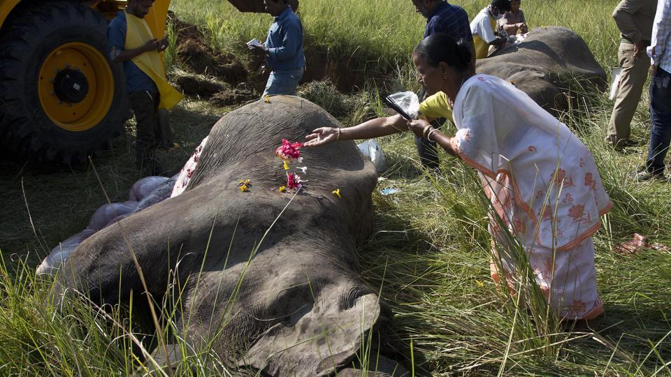 A woman joins a crowd laying flowers on the dead elephants as offerings. Wildlife warden Prodipta Baruah said the elephants were part of a herd of about 15 that had ventured into the area in search of food before dawn. Assam is home to Asian elephants, endangered due to habitat loss and poaching. While there was no major damage to the train and no passengers were injured, such incidents along railway tracks in the region are fairly regular. (Anupam Nath / AP)