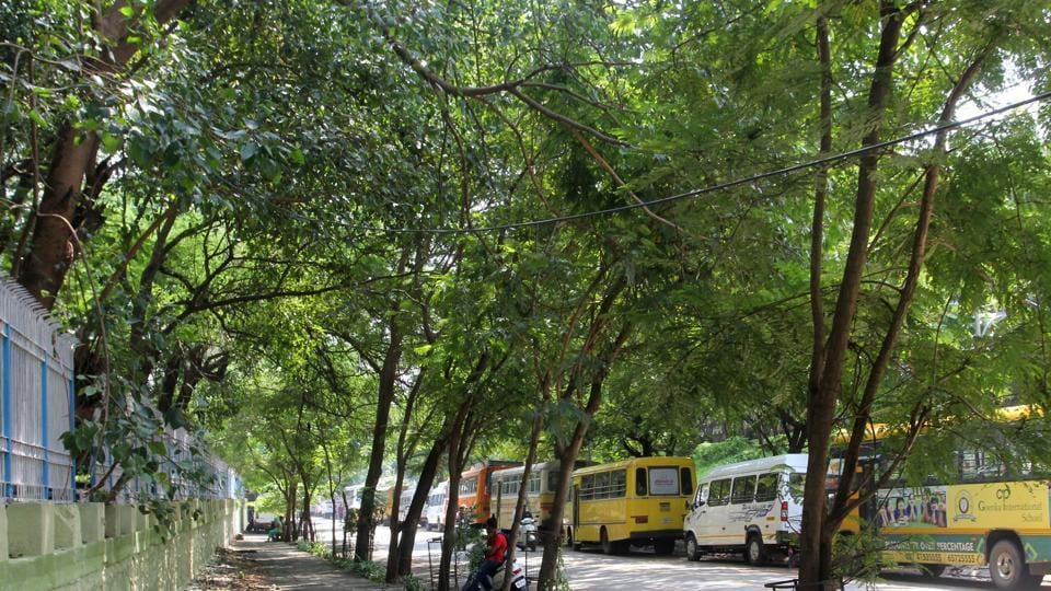 According to the petitioner, environmental activist Shobhit Chauhan, the project proponent Delhi Mumbai Industrial Corridor Development Corporation should explore the possibility of transplantation of the mature trees rather than recklessly felling the trees and earning revenue by sale of timber obtained.