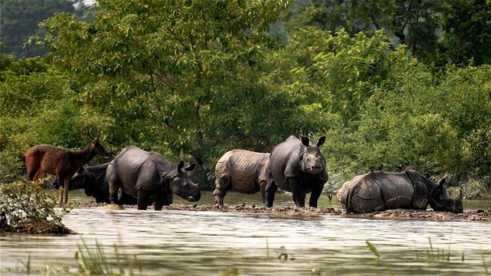Rhinos,Rhino horn,wildlife crime