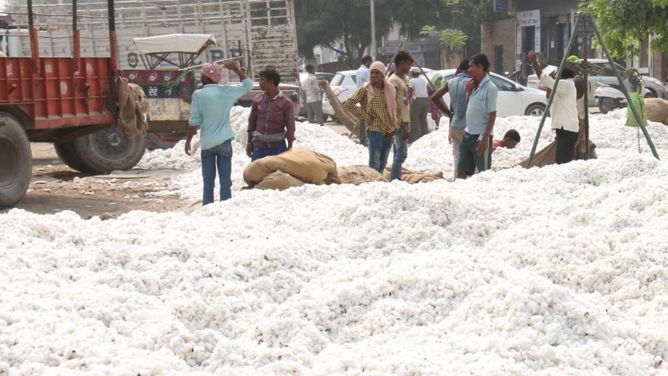 Gujarat,Saurashtra,Cotton