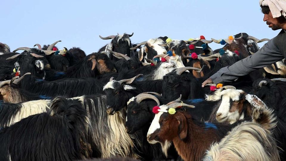 Pakistan,Animals,Census