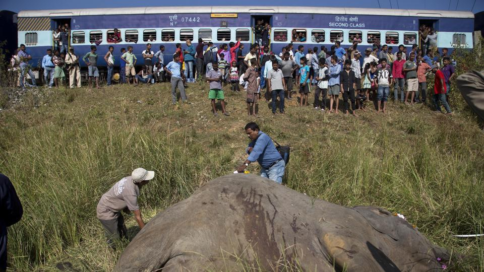 Man-animal conflict,Elephant accidents in Assam,Elephant corridors