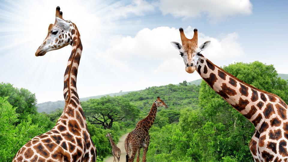 Africa,Safari,Travel