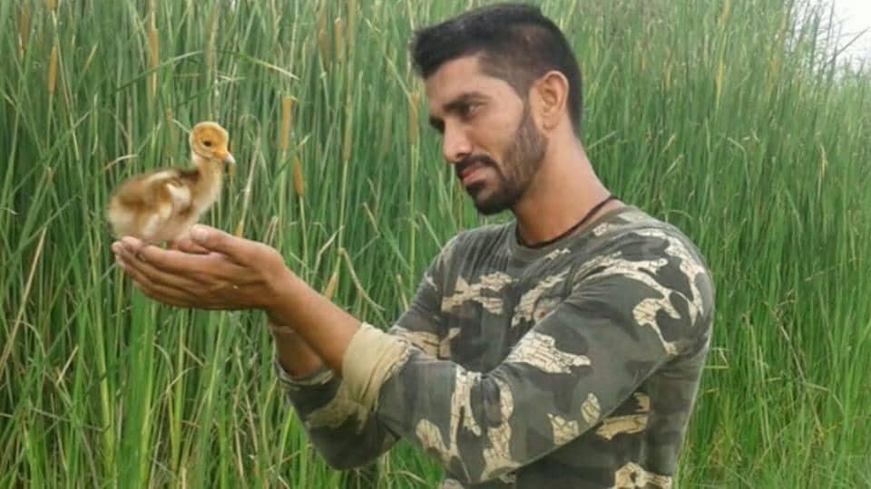 Wildbuzz,Sarus Crane chick,Dhanas lake