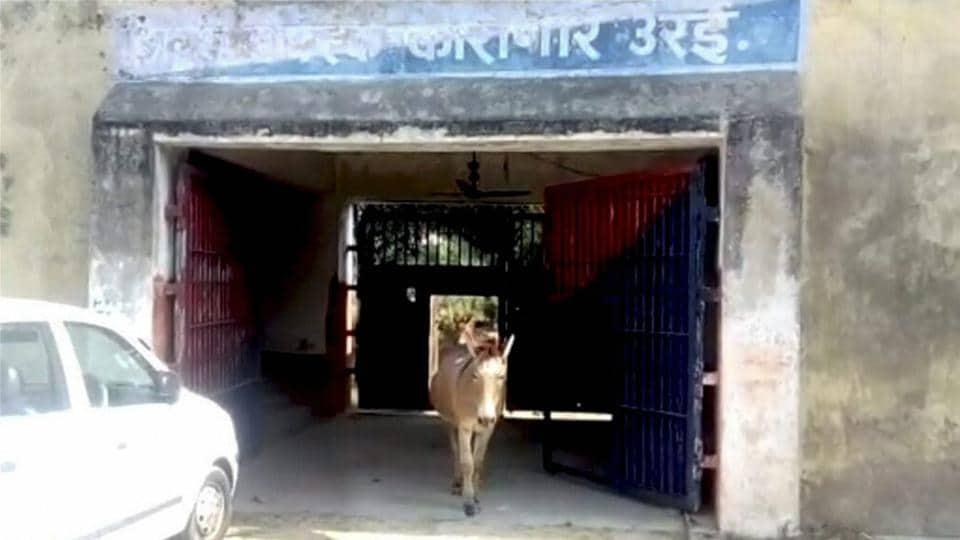Donkey,Jailed,Plants