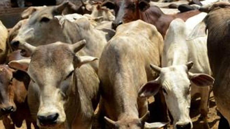 Cow vigilantes,Gau rakshaks,Narendra Modi