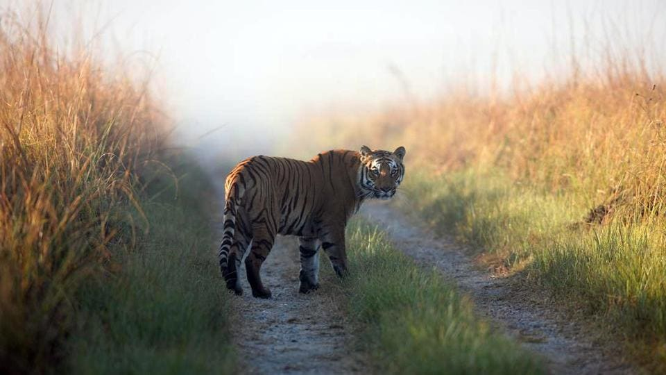 Corbett Tiger Reserve,CTR,Forest guard attacked