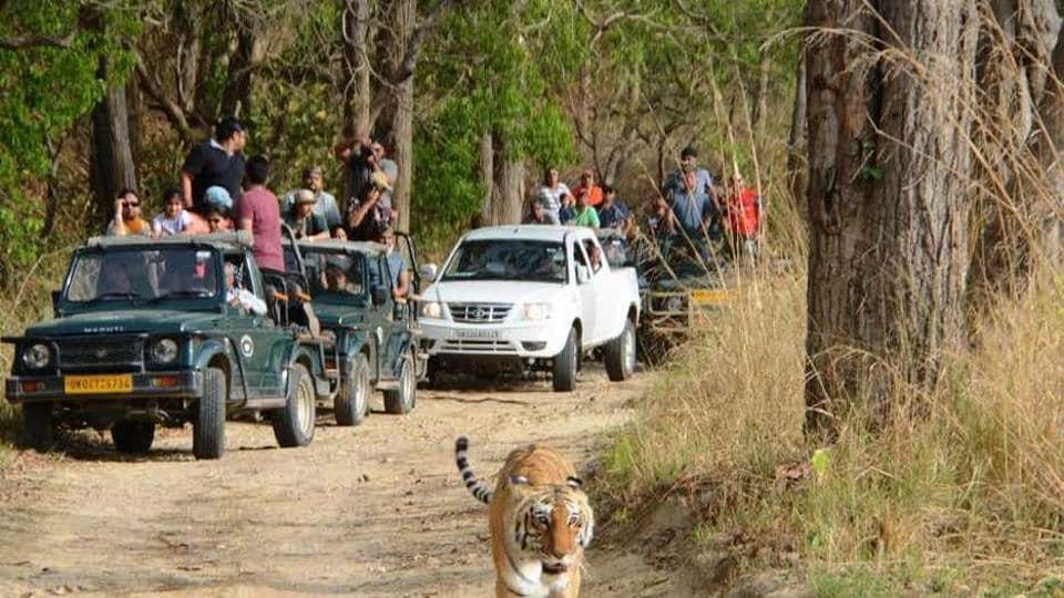 Uttarakhand news,Corbett Tiger Reserve,tiger death