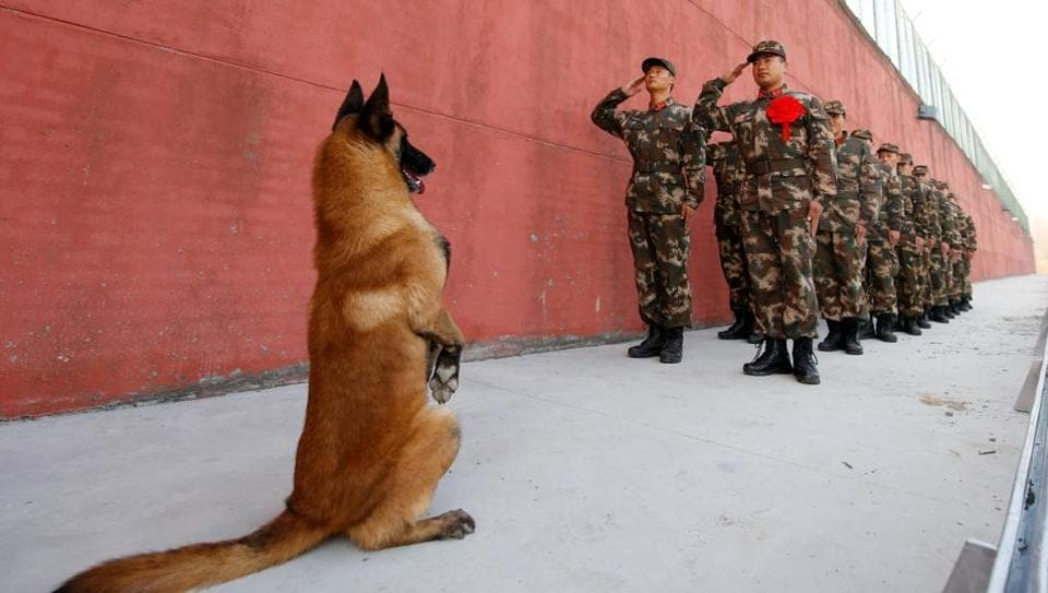 An army dog stands up as retiring soldiers salute their guard post during a retirement ceremony on November 28, 2017 in Suqian, Jiangsu province, China. (REUTERS)
