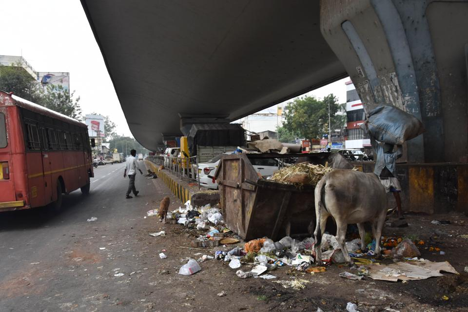 Cattle feeds on the garbage dumped in the open space below the Bhosari flyover.
