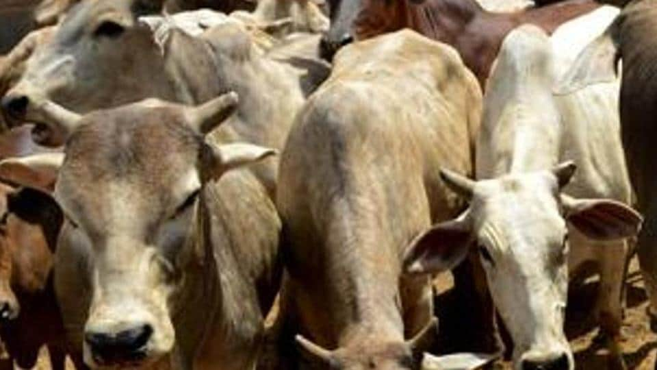 The environment ministry had notified the rules in May evoking criticism as the move was seen as a ploy to alienate Muslims who dominate the Rs 100,000 crore meat business in India.