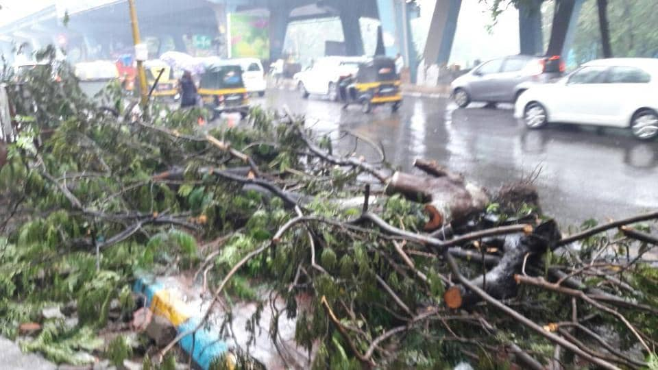 A tree collapses in Thane. (Praful Gangurde)