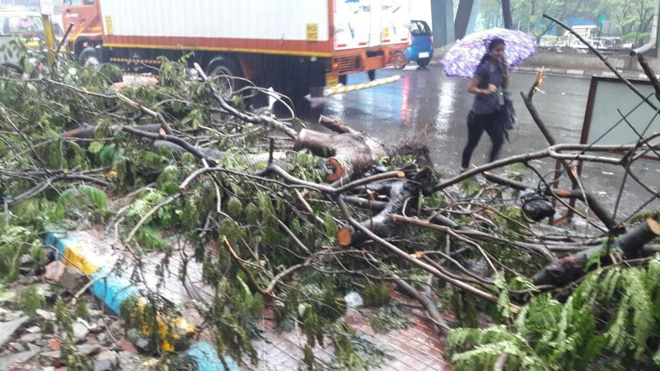 """A collapsed tree blocks a footpath near Thane. Maharashtra entered a state of high alert to tackle the stormy weather. According to IMD, """"Heavy rainfall is likely at a few places with squally wind speed reaching 50 to 60 kms per hour, gusting to 70 kms per hour very likely along coastal area in next 24 hours."""" (Praful Gangurde / HT Photo)"""