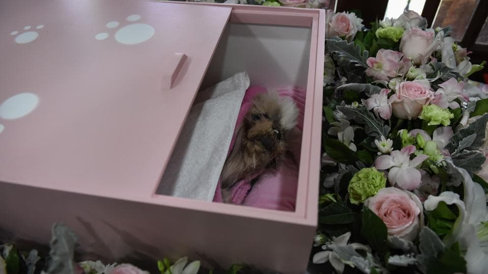 "Dollar, the Shitzu dog, inside her pink coffin during her funeral at Wat Krathum Suea Pla temple. Surging demand for his service also reflects the shrinking public spaces in the bustling Thai capital. ""Before, we buried them in authorised parks or backyards but now it's rare to find ones in Bangkok,"" said Phrakru Samu Jumpol, a monk at Wat Krathum Suea Pla. (Lillian Suwanrumpha / AFP)"