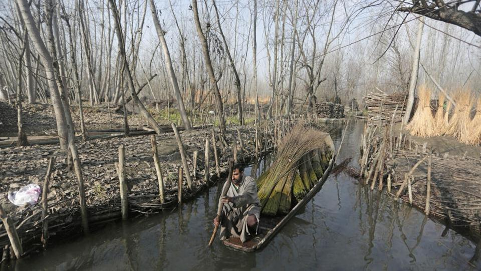 A man transports wicker sticks in a small boat on the outskirts of Srinagar on December 05, 2017. Wicker sticks are used to make Kangir--- a traditional Kashmiri firepot. (Waseem Andrabi / HT Photo )