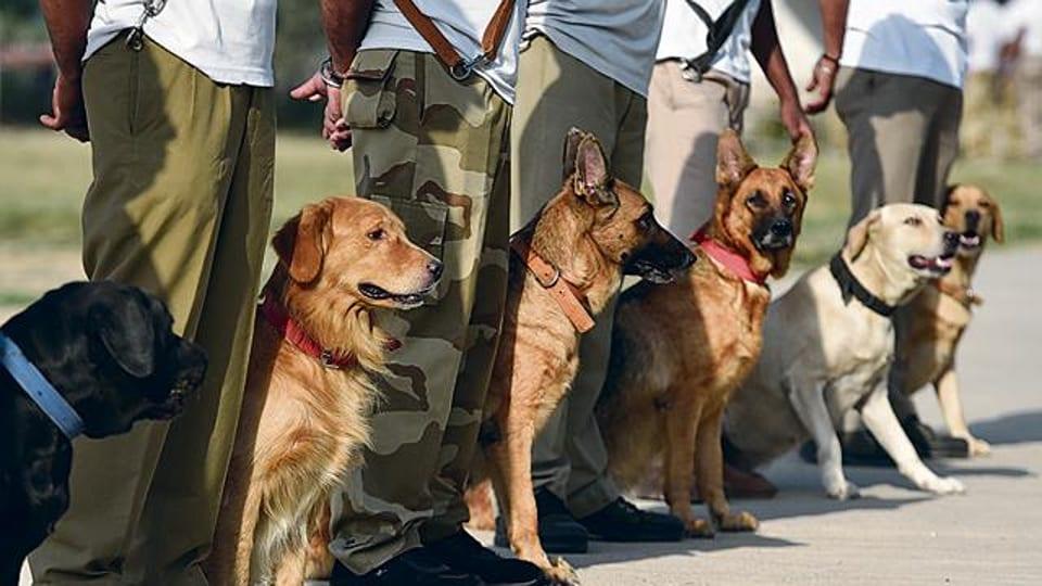 Adopt Retired War Dogs
