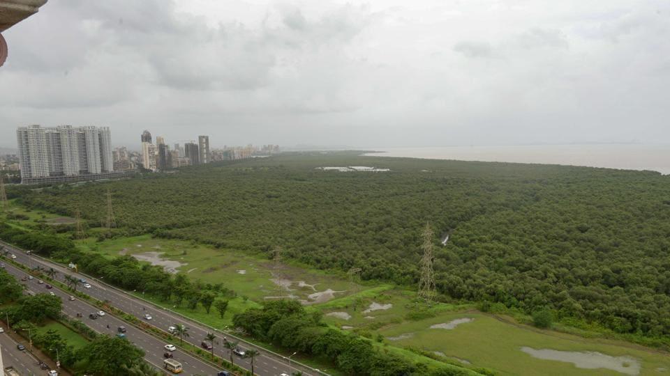 Mumbai,mangroves,thane creek