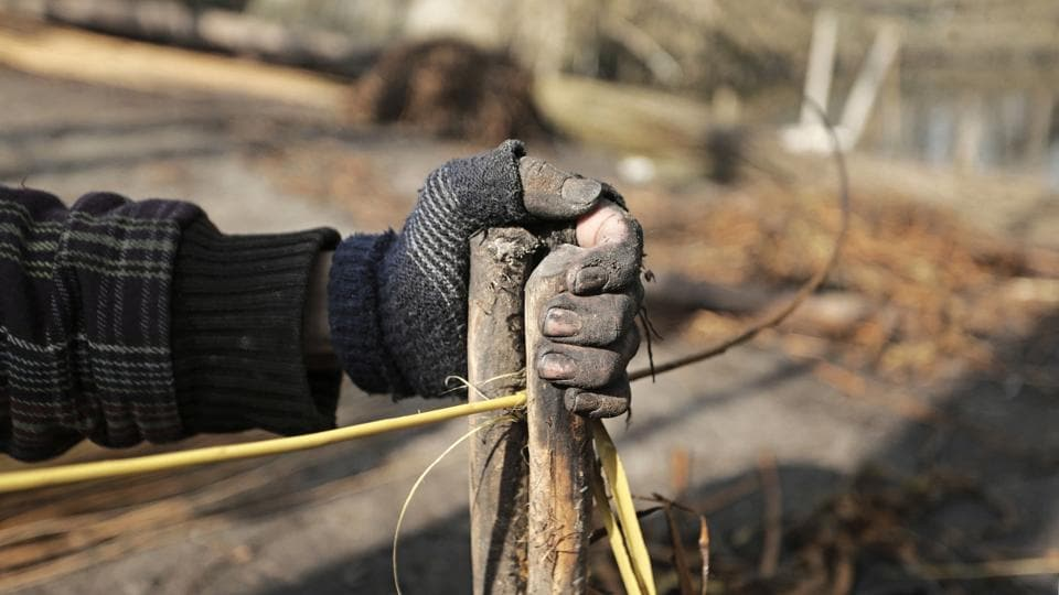 A detailed view of the special apparatus known as Zelan used in separating twigs from the boiled wicker sticks. Zelan is a pair of sturdy sticks sprung tightly together. The softened willow is then placed between slight gaps and pulled to and fro, breaking away the bark to reveal the softer pliable reed inside. (Waseem Andrabi / HT Photo)