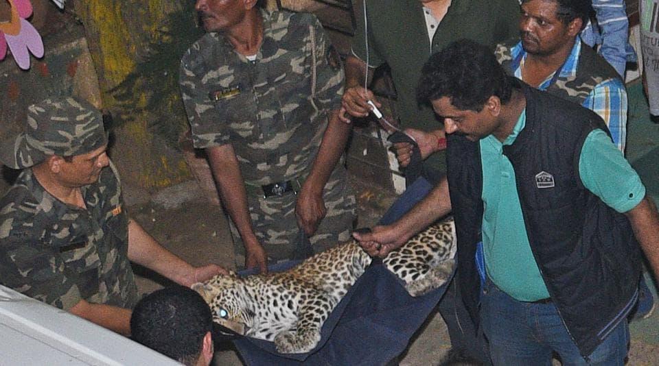 Mumbai,leopard,Sher-E-Punjab