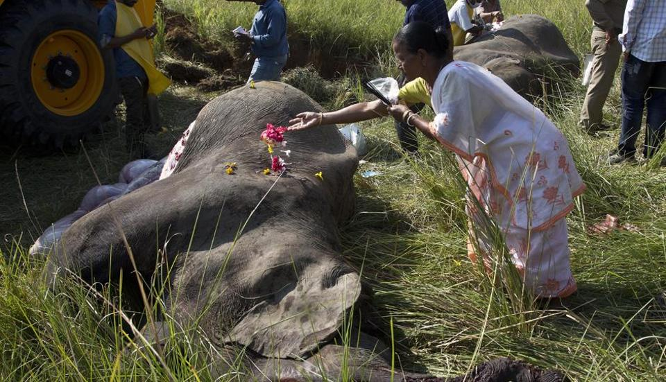 An  woman offers flowers on the carcass of an elephants that was hit and killed by a passenger train near a railway track on the outskirts of Guwahati, Assam last month.