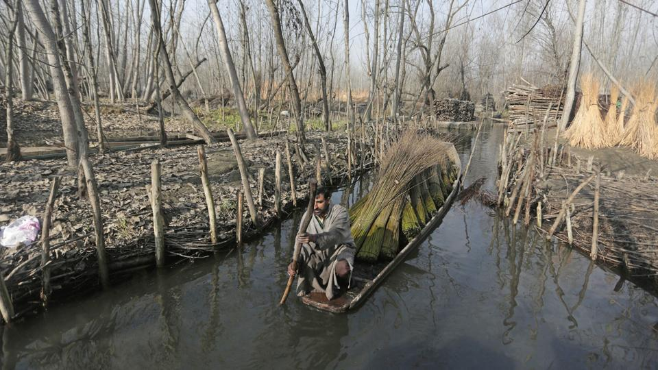 A man transports bundles of willow sticks in a small boat on the outskirts of Srinagar. These sticks are used to make the Kangri, traditional portable firepots kept inside the Pheran— a woollen Kashmiri cloak. With the onset of winter and temperatures in the region headed towards sub-zero, these firepots serve as mobile heaters and have been an age old emblem of the season. (Waseem Andrabi / HT Photo)