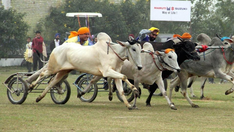 "A petition seeks ban on ""rekla race"" (bullock cart race) in Tamil Nadu in view of a Supreme Court order."