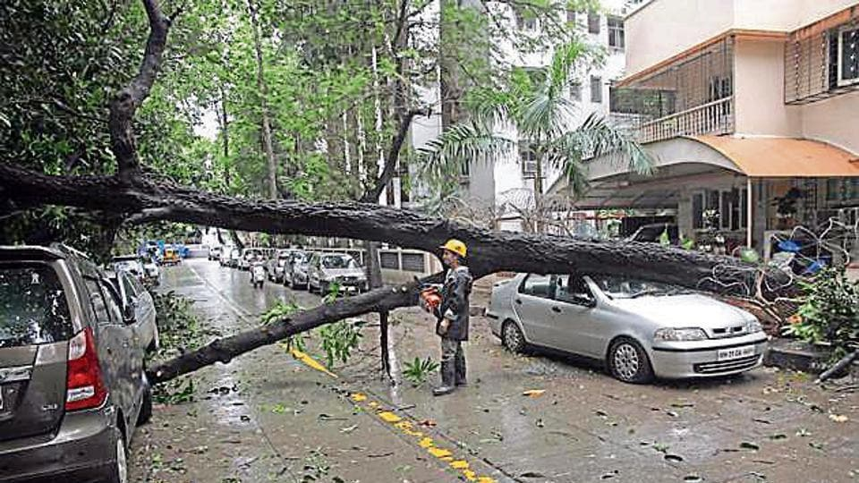 In a meeting of the civic tree authority on Tuesday, Abhijit Samant, a tree authority member, proposed a mechanised tool to trim and cut trees
