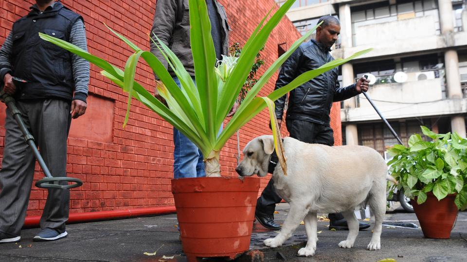sniffer dogs,Phillaur,Micky