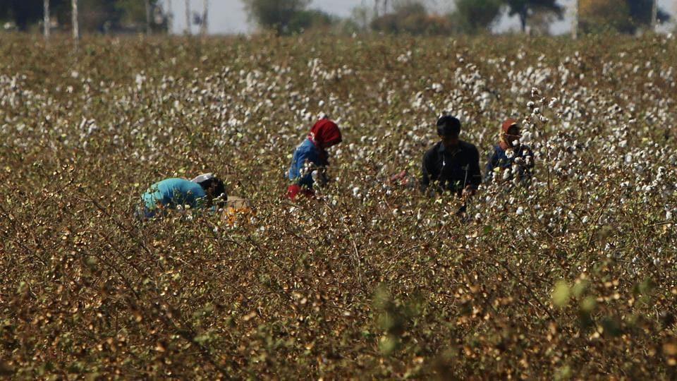 Narendra Modi,Farmer suicides,Chai pe charcha