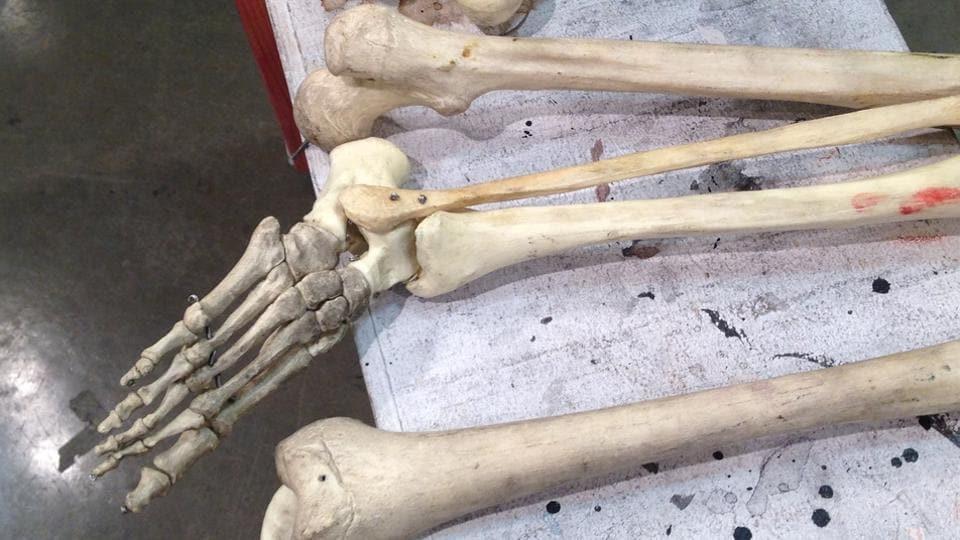 Human foot,Human foot bone,British Columbia