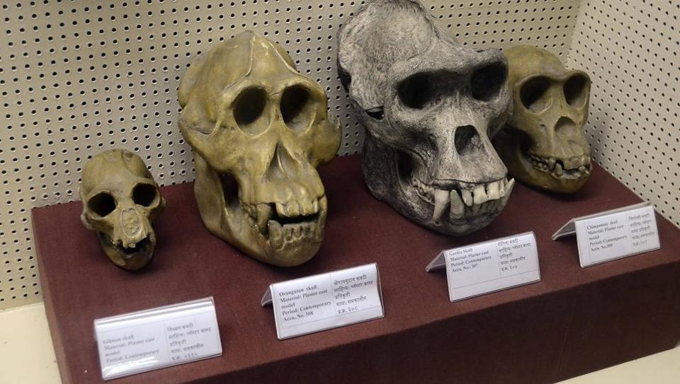 SPPU,Iravati Karve Museum,Anthropology