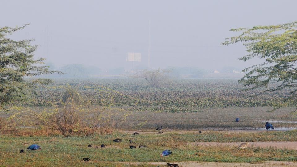 NGT,National Green Tribunal,Basai wetland