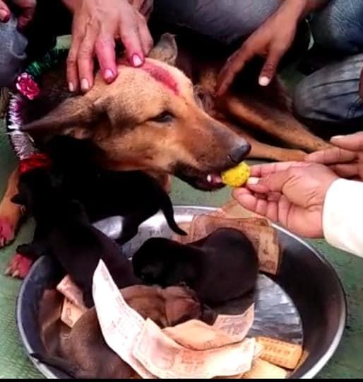 Celebration of birth of puppies in Sagar district