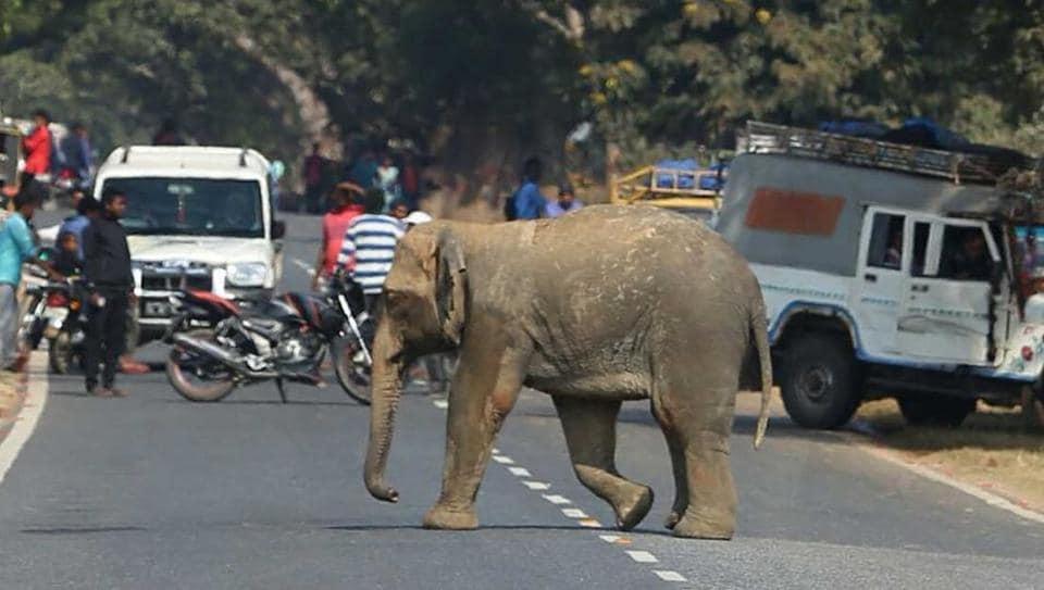 Elephant calf,Jharkhand,Forest officials