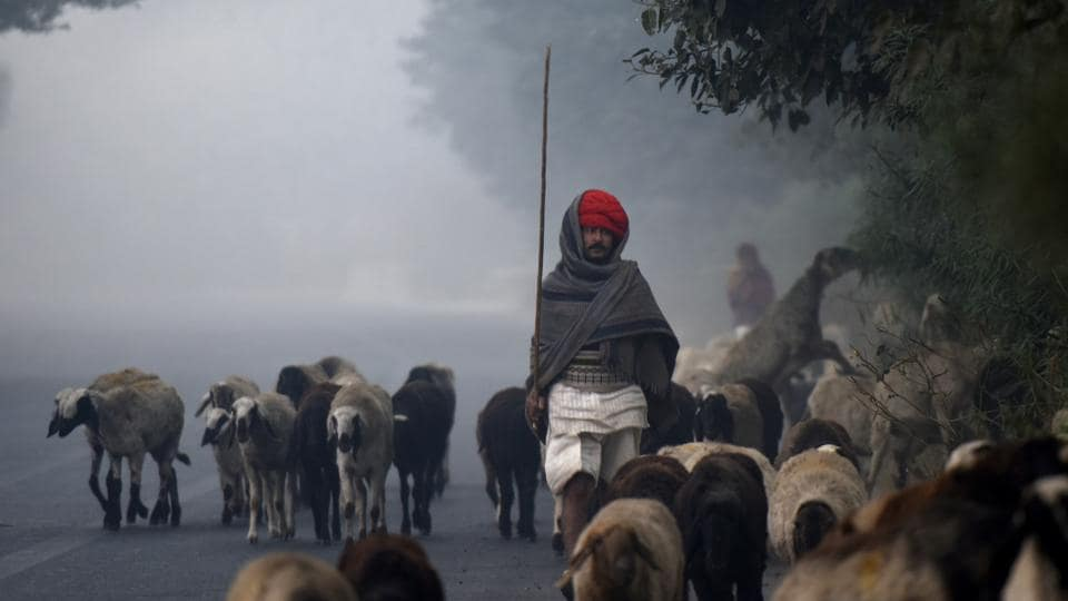 A nomad walks his herd on a smog filled winter morning in the outskirts of Dwarka in New Delhi on Sunday. (Vipin Kumar / HT Photo)