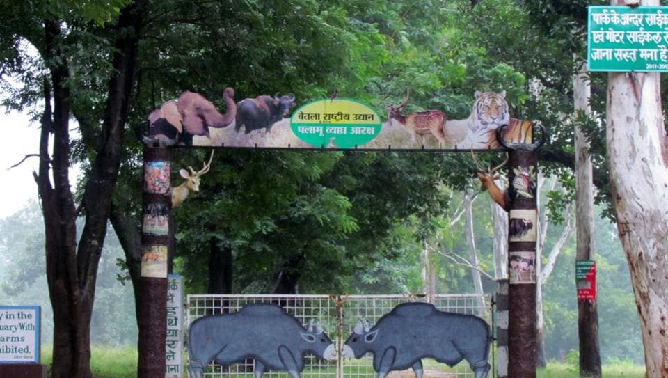 The Palamu Tiger Reserve at Betla in Jharkhand. The Jharkhand government has failed to declare ecologically sensitive zones (ESZ) for 10 of the 11 wildlife sanctuaries.