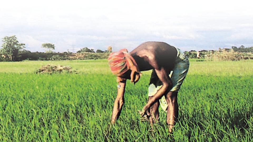 Gujarat election results,rural voter Gujarat,agriculture
