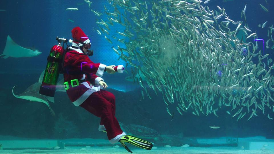 In South Korea Santa Claus geared up for a swim with the residents at the Coex Aquarium in Seoul. Christmas is coming and the jolly man in red has been busy making appearances around the world in the quirkiest ways possible. (Jung Yeon-Je / AFP)
