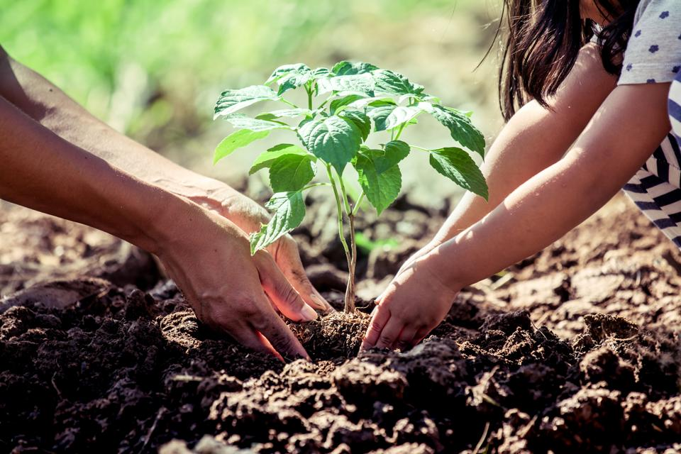 What Does Environment Have To Do With >> Save The Planet 8 Things Schools Can Do To Create Environment