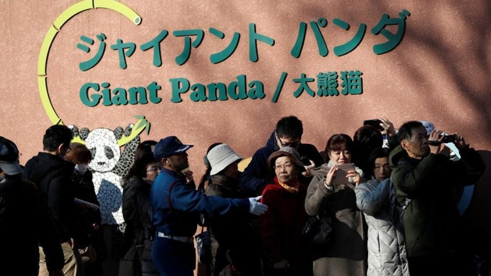 2,000 lucky winners of a Japanese lottery of 18,000 people were the first to get a live glimpse of the panda cub on Tuesday, but others had to settle for watching the cub and her mum on video livestream. The healthy female cub was born in June, five years after her mother lost another cub within days of its birth. (Issei Kato / REUTERS)