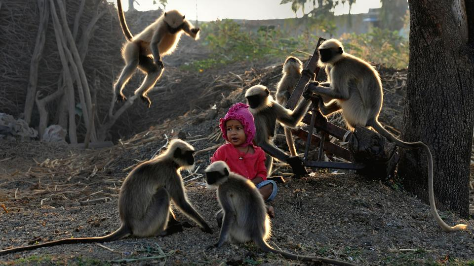 Samarth Bangari, 2, sits among langurs in a field near his home in Allapur in Karnataka. While he is still too young to talk, Samarth has become a subject of local intrigue after befriending a gang of monkeys –reminiscent of the famous character 'Mowgli' portrayed by Rudyward Kipling in ' The Jungle Book,' about a boy who grew up in the wild in India. (Manjunath Kiran / AFP)
