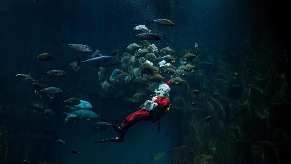 Santa Claus gets a closer look at the fish on view during a dive in the Paris aquarium on December 21, 2017. (Alain Jocard / AFP)