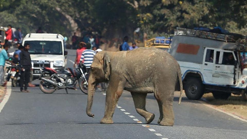 Elephants,Assam,Jharkhand
