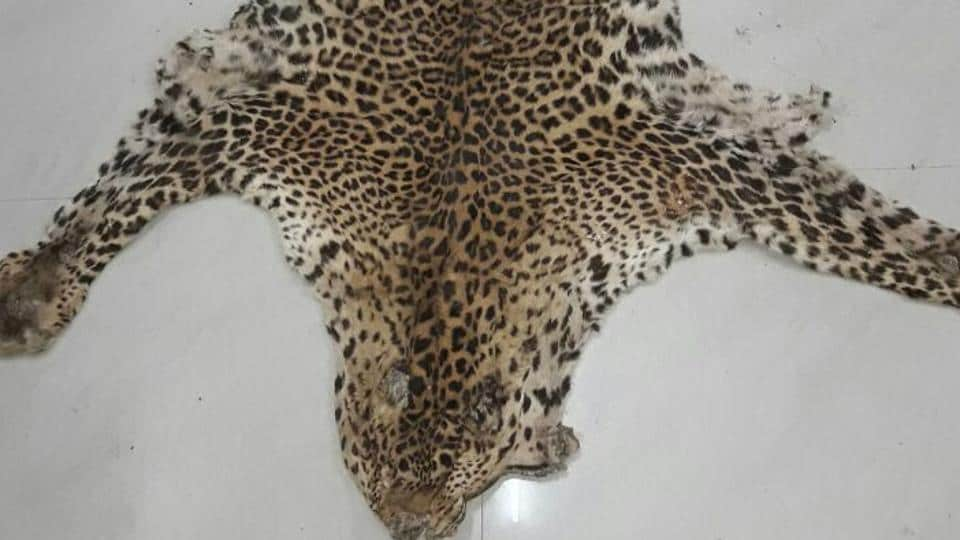 55 leopards were poached in 2017.
