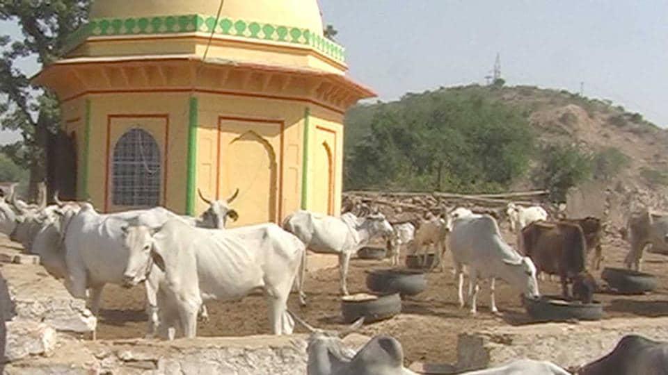 Cow smuggling,Cow slaughter,Gau rakshak