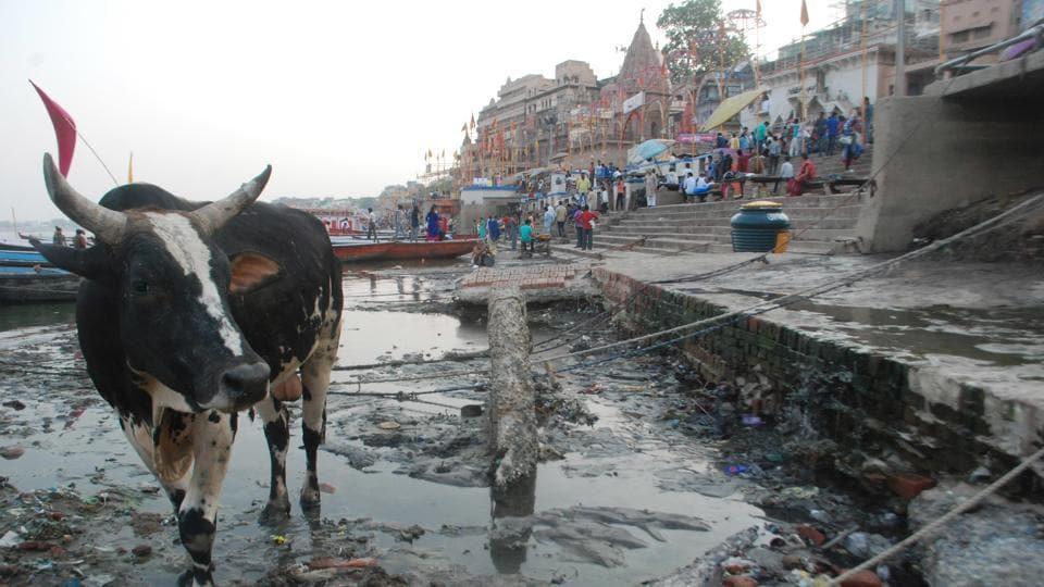 Ganga Pollution,Ganga Action Plan,CAG