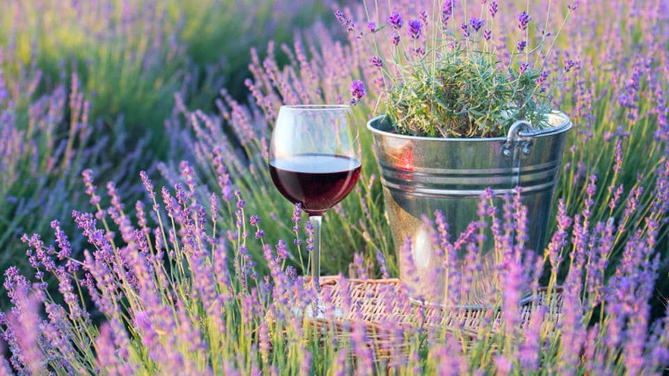 New World or Old World: What wine do you prefer?